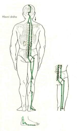 Meridián močového měchýře